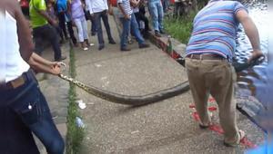 桥上出现一条大蛇,比成年人大腿还粗,看着就