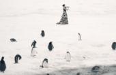 参加演奏会的企鹅海豹们