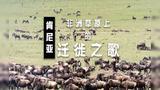 百万动物大移民 大草原上的迁徙之歌