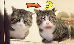猫咪开了美颜,一脸蠢萌!