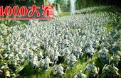 四千步兵大战10只巨型树人