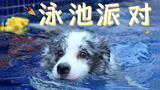 带狗狗去3000块/天的泳池别墅玩儿,原来不是每只狗都会游泳啊?