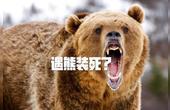 遇到熊要装死?5个生存迷思可能会要人命
