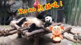 【嘟督不噶油】嘟督带你在北京动物园里抓鸡做鸭!