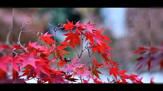 我的视频相册2万紫千红的季节