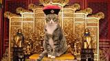 含猫量最高的博物馆,猫咪和龙椅一起展出