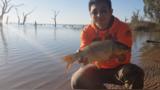 中国人可以报名吃澳大利亚鱼头啦