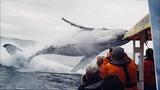 5大难得一见的鲸鱼跳跃,第1大360度转体太漂亮了