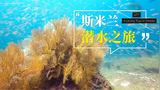 全球潜水爱好者心醉的那片蓝,无尽的珊瑚和鱼群,呈现原始之美!