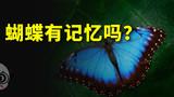 蝴蝶会记得自己是条毛毛虫吗?