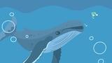 座头鲸真的会唱歌吗?