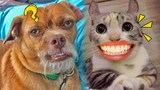 那些丑出天际的宠物!