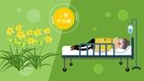 吃新鲜的黄花菜为什么容易中毒?