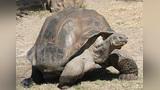 世界上能长寿的3种动物,乌龟只能排在最后,而第一竟然能永生