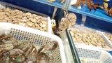 网友海鲜店吃饭遇老鼠乱爬 店家:每个月做3次消杀 不知道哪来的
