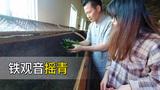 实拍福建铁观音制茶工艺摇青,茶叶质量好不好,这一步很重要!