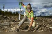 如果再种1万亿棵树,会发生什么?耶鲁大学给出了这样的答案