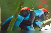 鳥界求愛聯盟!