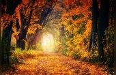 什么是森林栖息地?