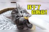 小奶猫单手举奶瓶对瓶吹