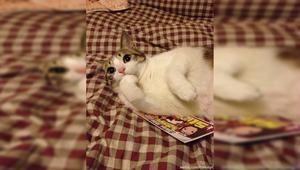 在冬天如何快速获得一只猫?
