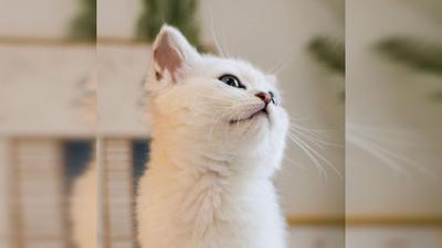 花花与三猫CatLive