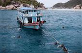 泰国唯一有鲨鱼的浮潜点龟岛