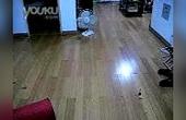 猫咪玩自动逗猫杆2