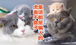 """那些""""坑娃""""的貓咪們"""