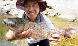 如何正确吃掉一条草鱼