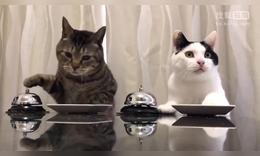 如何讓貓覺得自己在使喚人類而實際上是被人控制了