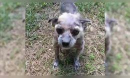 兽医放弃了可怜的流浪狗,但他没有!