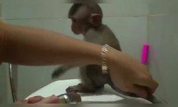 告诉孤儿猴要洗澡,它回应了一声,真可爱