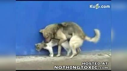 狗猩交配视频_动物性生活 猫狗交配-搞笑视频-搜狐视频