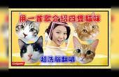 【鱼乾】用一首歌介绍四只猫咪!超洗脑广告曲 [ 自然嗨!] 翻唱。