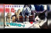 【鱼乾】满满都是猫咪的「相岛」!猫岛赏猫+赏樱Vlog