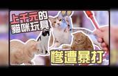 【鱼乾】上千元的猫咪玩具,惨遭妹子暴打!