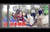 【鱼乾】关西八侠 日本VLOG - 摸猫咪、被鹿追、采草莓!