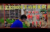 【开箱喳#56】花20000买的椰蛋树被海关斩首了!!!