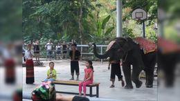 西双版纳*看大象表演<选登>