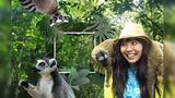 近距离接触马达加斯加狐猴,带根香蕉你就是他亲爹