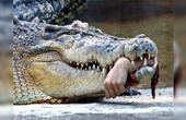 凶残巨鳄竟活吞日本兵!