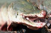 第50期 世界最毒怪鱼竟吃人成性 !