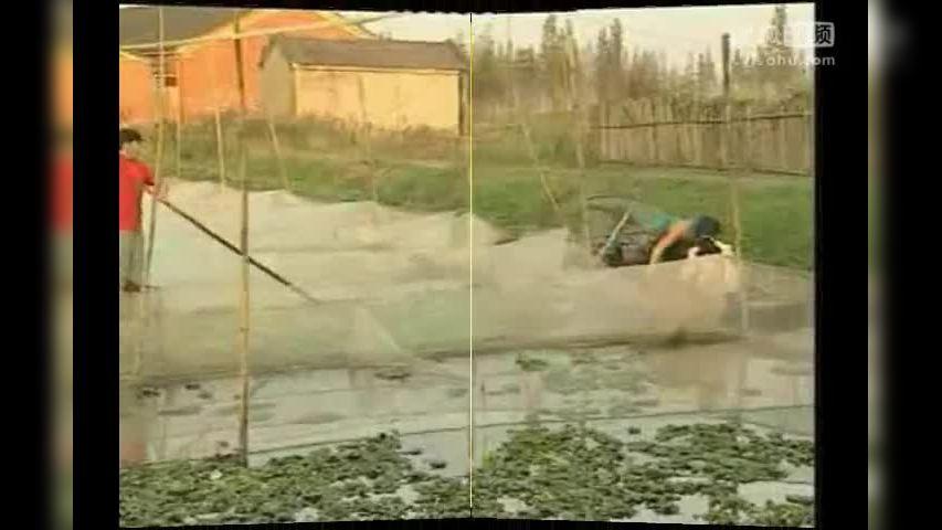 黄鳝养殖视频_黄鳝养殖技术 黄鳝人工养殖技术 饲料配比管理-其他视频-搜狐视频