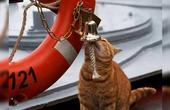 军舰上养猫是种传统?