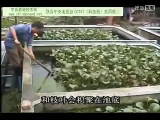 黄鳝养殖视频_黄鳝繁殖,黄鳝养殖-三农视频-搜狐视频