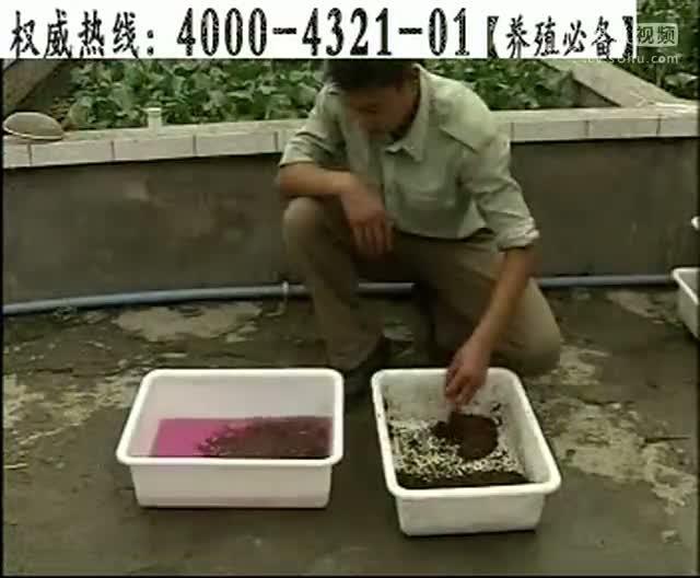 黄鳝养殖视频_黄鳝养殖骗局-三农视频-搜狐视频