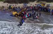 阿根廷志愿者救擱淺虎鯨
