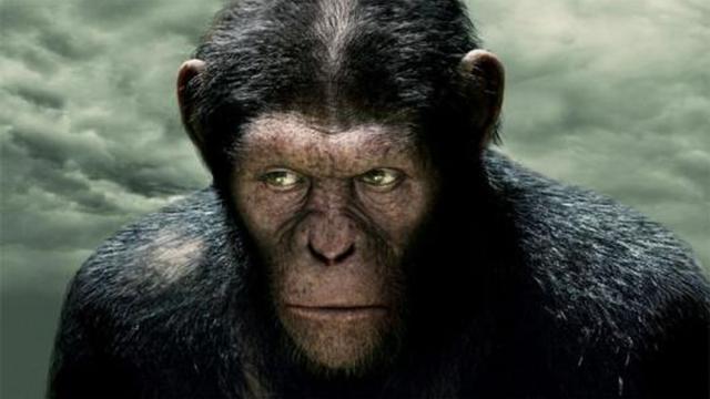 用《西游记》打开《猩球崛起》是什么样子的